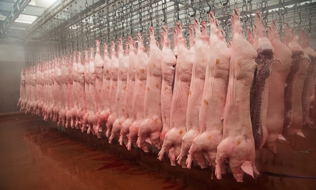 Pig-carcasses-hanging-in--009